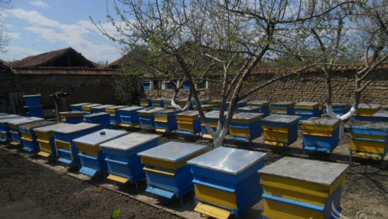 ДФЗ приема документи за кредитиране на инвестициите по Пчеларската програма