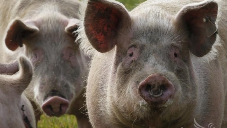 ЕС започва дело срещу Русия заради забраната за внос на свинско