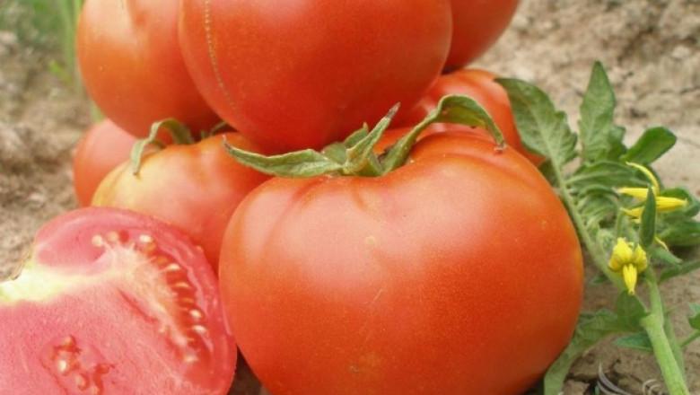 Земеделци ще получат до 250 лв/дка за борба с доматения миниращ молец