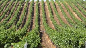 134 млн. евро е бюджетът по новата програма за подпомагане на лозаро-винарския сектор