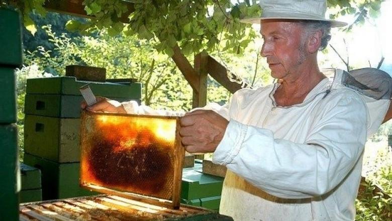 Днес изтича срокът за заявления по мярка А на Пчеларската програма