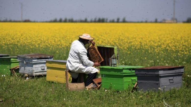 Мария Габриел участва в дискусия за перспективите пред пчеларския сектор