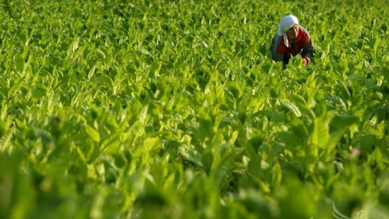 Лютви Местан заяви,че ДПС застава зад протеста на тютюнопроизводителите