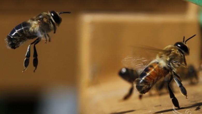 На 8-и Януари започва прием на заявления по Националната пчеларска програма 2014-2016