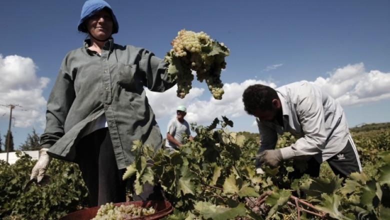 Комисията по земеделие в ЕП ще обсъди бъдещето на малките земеделски стопанства