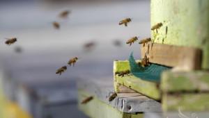 Националната програма по пчеларство 2014-2016 г. ще представи ДФЗ - Agri.bg