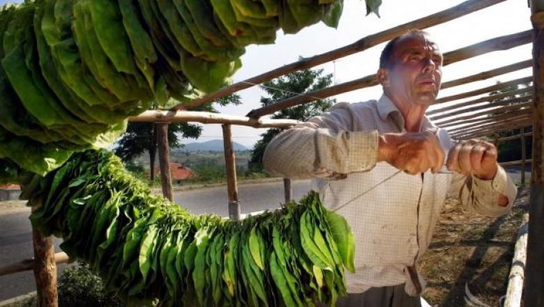 Тютюнопроизводителите влизат в регистър, обявиха от МЗХ