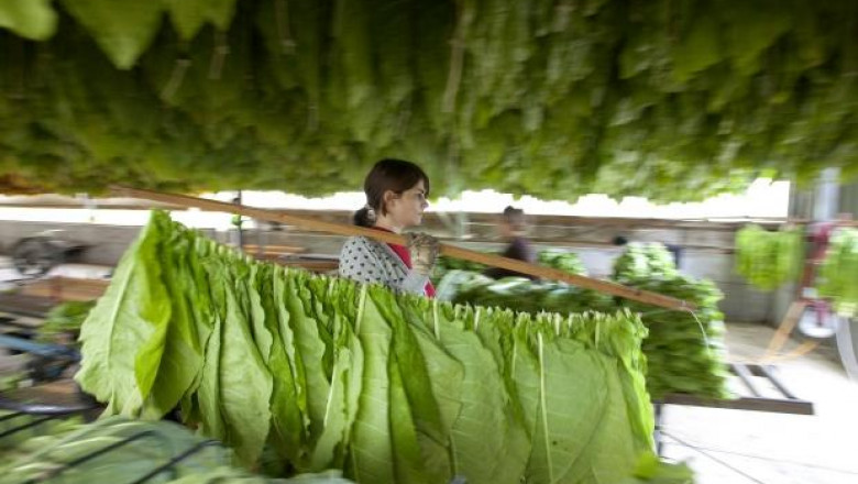Тютюнопроизводители благодариха на Греков за спазените обещания