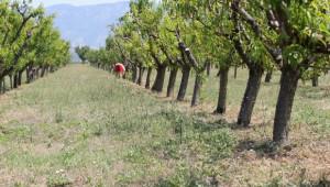 Адекватна политика в овощарството искат производители - Agri.bg