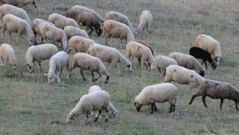 МЗХ обяви сумите за Национални доплащания на глава животно