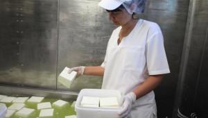 114 са производителите на мляко в област Монтана - Agri.bg