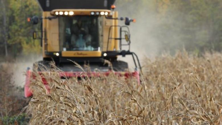 Завършва жътвата на слънчоглед и царевица в област Добрич