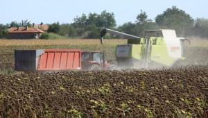 Жътвата на слънчоглед във Видинско тече при 186 кг/дка