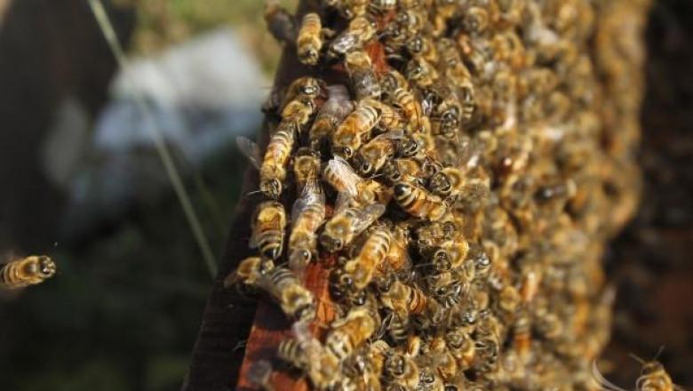 Петя Иванова, пчелар: Продължаваме борбата за субсидии на пчелно семейство (интервю)