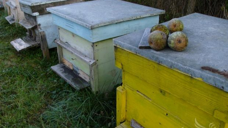 Турски пчелари се срещнаха с българските си колеги в Царево
