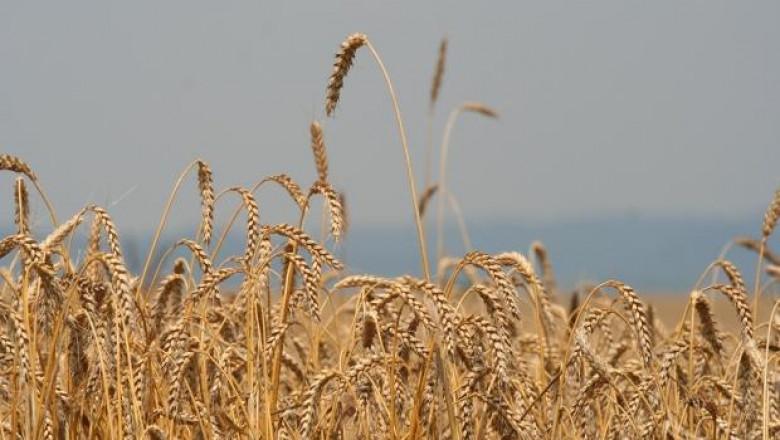 Жътвата на пшеница в област Ямбол приключва при добив 395 кг/дка