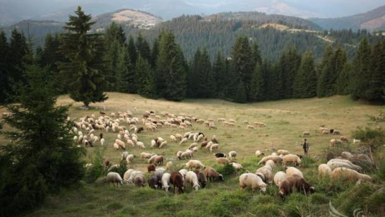 Променят плана за националните паркове в подкрепа на животновъдите
