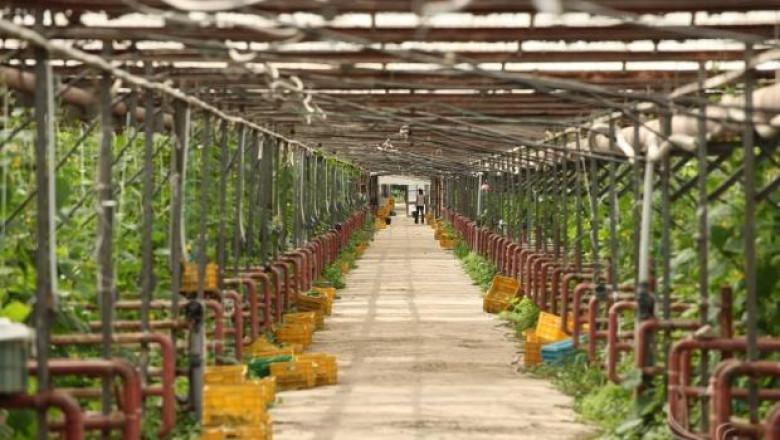 Намалена ставка от 7% ДДС за зеленчуци, плодове и грозде обмислят в МЗХ