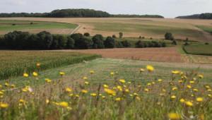 ОСП 2014-2020 ще доведе до дълбоки промени в селското стопанство (обновена) - Agri.bg