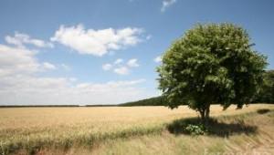Български фермери дадоха конкретни предложения за новата ОСП (видео)