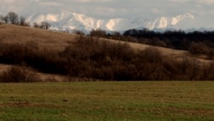 НАЗ с очакване за чувствително намаление на зърнената реколта през тази година - Agri.bg