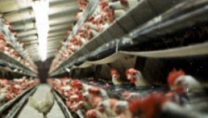 Покачването на цените на яйцата не е спекулация, заявиха производители - Agri.bg