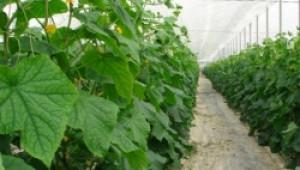 Комисии ще установяват доколко са засегнати производители на зеленчуци от е-коли - Agri.bg