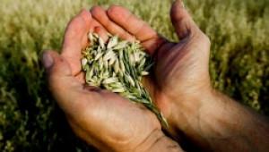 Над 70 фирми ще участват в борсата за семена и посадъчен материал в Добрич