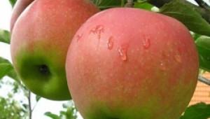 Празник на плодородието започва днес в Кюстендил - Agri.bg