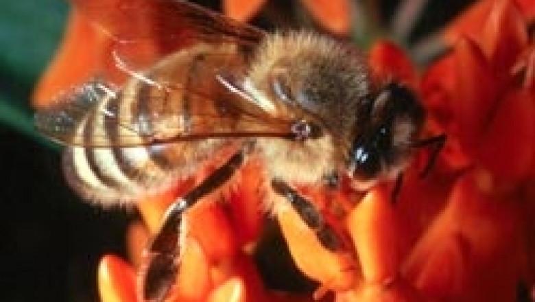 Качественият мед може да се разпознае единствено чрез анализ на съдържанието, коментира проф. Мария Чучукова
