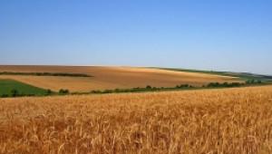 Инвестициите в земеделски земи остават атрактивна възможност въпреки сътресенията на световните финансови пазари