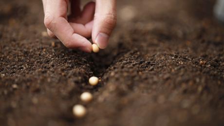 На човечеството му остана само половината от плодородните почви