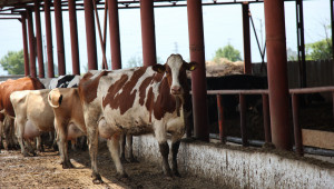 Животновъдна ферма в Раковски