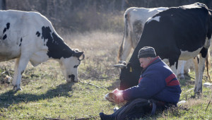 Нови промени: Таван на животните в семейни ферми