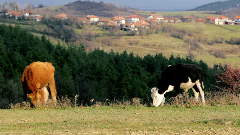 Животновъди получават 26,3 млн. лева de minimis