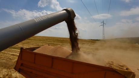 290 лв. на тон пшеница прогнозират във Видинско