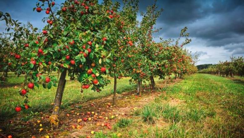 Опадане на цветовете и на завръзите при овощните дръвчета