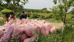 Розопроизводители настояват за de minimis и тази година