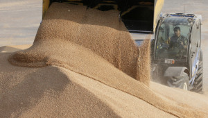 Пшеница: Египет вдига цената в Черноморския регион