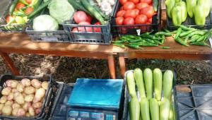 Събор на зеленчукопроизводителите събира най-добрите градинари в село Одринци