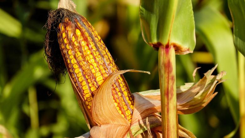 Департаментът по земеделие срина цените на зърното