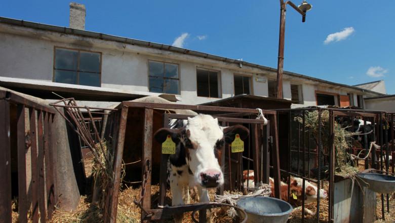 ДФЗ: Фермерите доказват реализирано мляко и животнидо 31 октомври