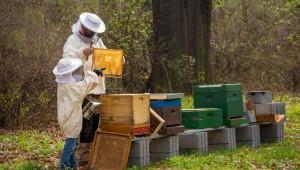 Ядосани пчелари отново надигат глава