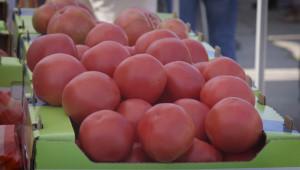 Фестивалът на розовия домат припомни вкуса на традициите