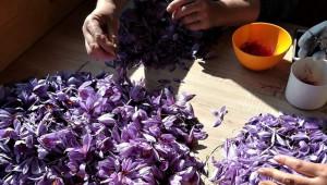 Фермерски пазари: Цвекло на крекери в Пловдив и шафран във Варна