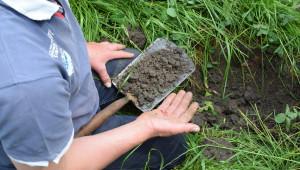 Агроиновации: Богати на въглерод смесени пасища в Холандия