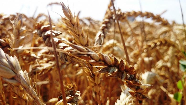 Стопани: Производството на пшеница е скъпо удоволствие