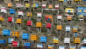 Пчелари печелят повече, използвайки дигитални данни