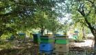 Продавам 30 пчелни семейства с кошери ДБ - Снимка 2