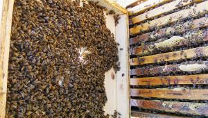Пчелар: Цената на меда е престъпно ниска - Agri.bg